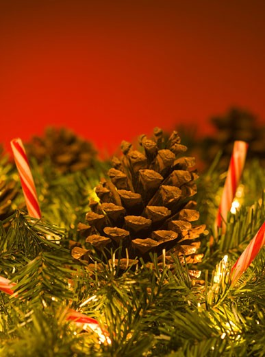 Close-up of a pine cones on a Christmas tree : Stock Photo