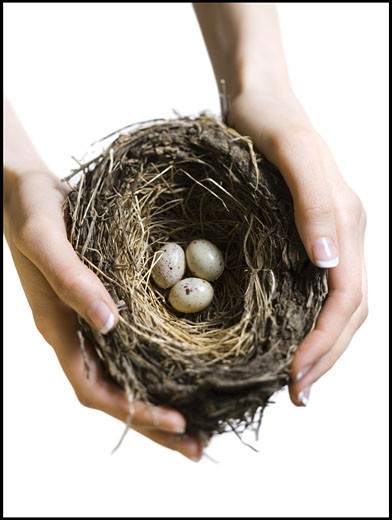 High angle view of a woman's hand holding a bird's nest : Stock Photo