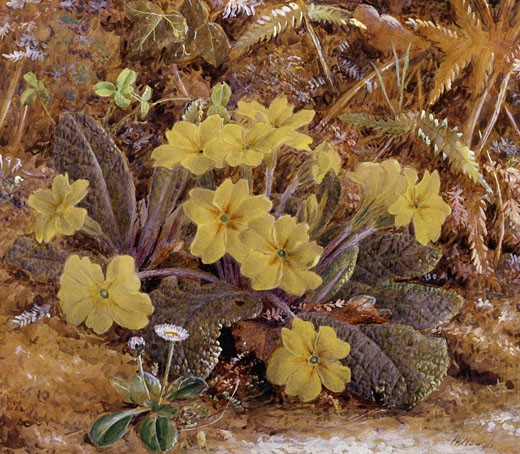 Stock Photo: 1661-352 Primroses William Hough (1819-1897 British)