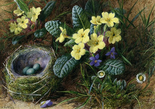 Stock Photo: 1661-356 Daisies, Primroses and Violets with a Bird's Nest Charles Henry Slater (1820-1890)