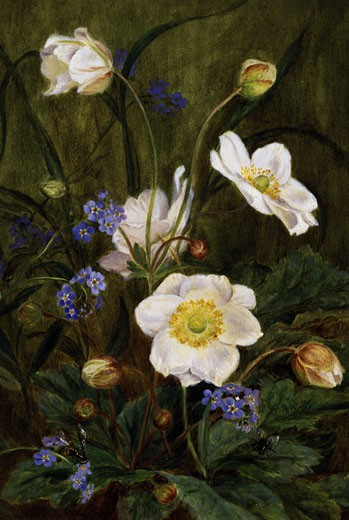 Anemones and Forget-Me-Nots Maria Dorothea Krabbe (1837-1918) : Stock Photo