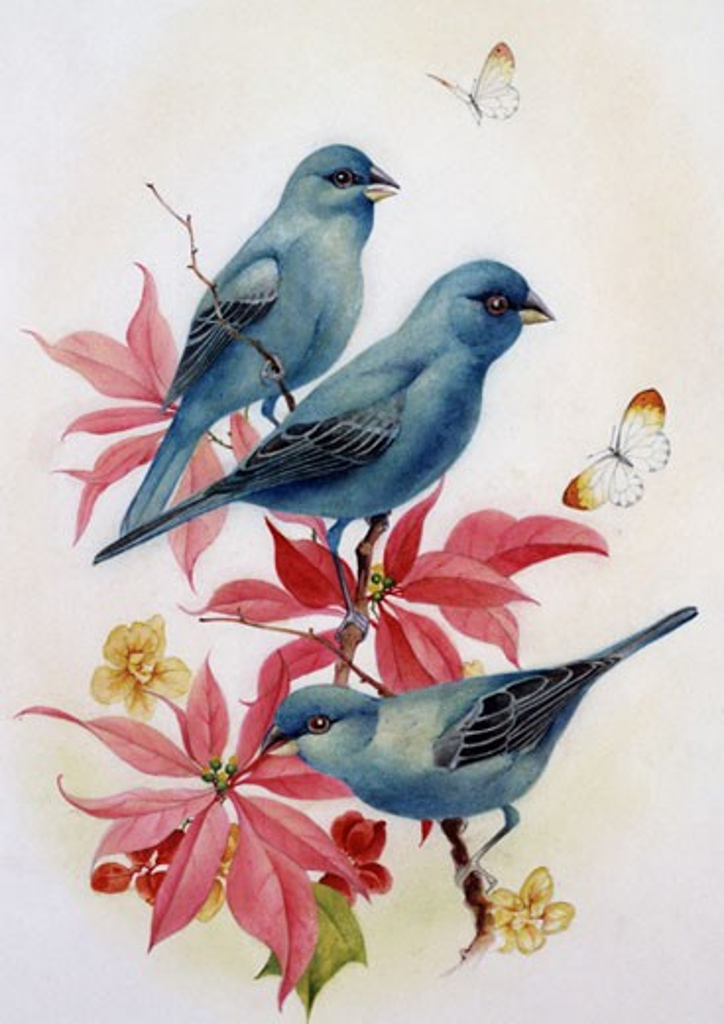 Stock Photo: 1661-377 Bluebirds Edward Julius Detmold (1883-1957 British)