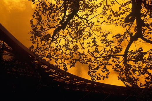 Stock Photo: 1663R-11025 Silhouette of a tree beside a tower, Eiffel Tower, Paris, France
