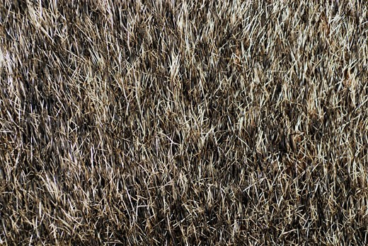 Close-up of dry grass : Stock Photo
