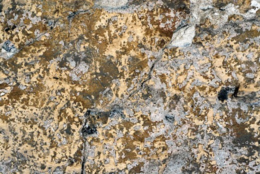Stock Photo: 1663R-12038 Close-up of a cracked plaster