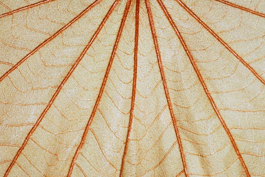 Close-up of a leaf : Stock Photo