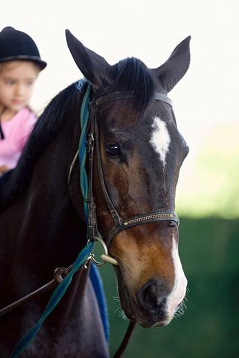 Girl riding a horse : Stock Photo
