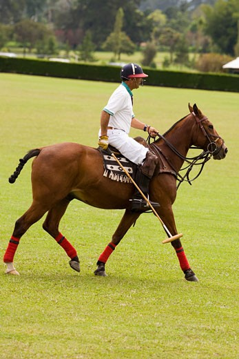 Side profile of a mature man playing polo : Stock Photo