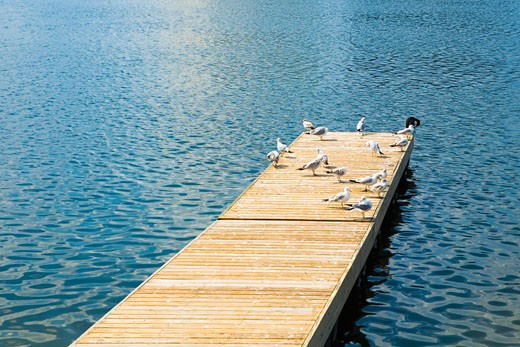 Stock Photo: 1663R-27530 Pigeons perching on a pier, Altamonte Springs, Orlando, Florida, USA