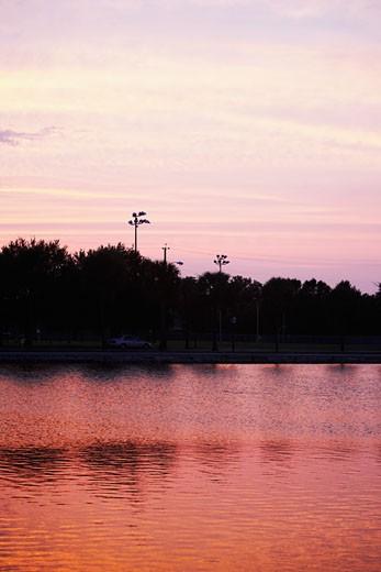 Silhouette of trees at dusk, Charleston, South Carolina, USA : Stock Photo