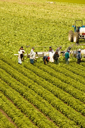 High angle view of people working on a farm, Los Angeles, California, USA : Stock Photo