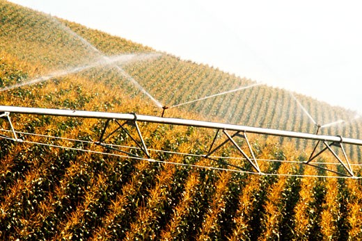 Stock Photo: 1663R-37694 Close-up of sprinklers spraying water on a field