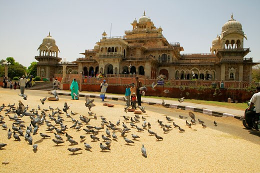 Stock Photo: 1663R-38854 People feeding pigeons outside a museum, Government Central Museum, Jaipur, Rajasthan, India