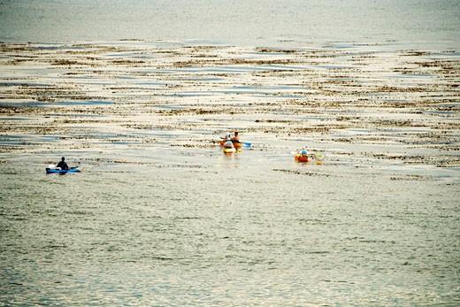 Stock Photo: 1663R-39064 High angle view of a group of people kayaking, La Jolla Reefs, San Diego Bay, California, USA