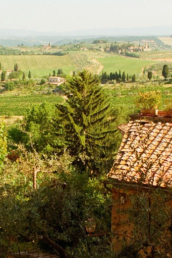 Stock Photo: 1663R-54271 High angle view of a house with vineyard in the background, Siena Province, Tuscany, Italy
