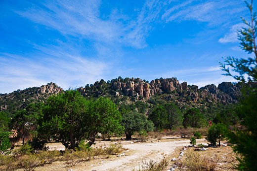 Trees in front of rock formations, Sierra De Organos, Sombrerete, Zacatecas State, Mexico : Stock Photo
