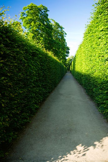 Stock Photo: 1663R-8296 Plants along a walkway, Czech Republic
