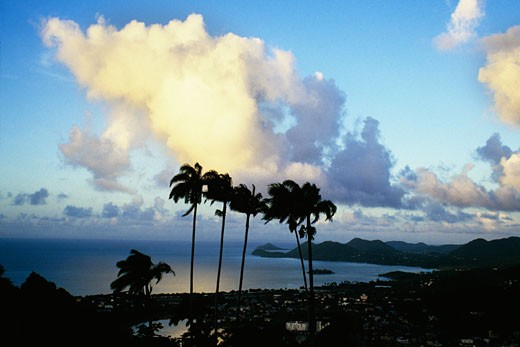 Palm trees are seen against tropical cloud formation on the island of St. Lucia : Stock Photo