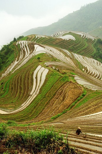 paddy fields near Ping An village in Guilin area of China : Stock Photo