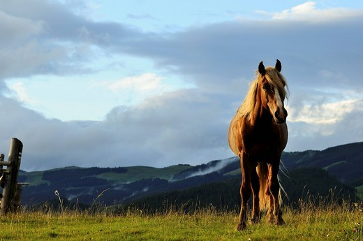 Stock Photo: 1669-16098 portrait of brown horse on meadow