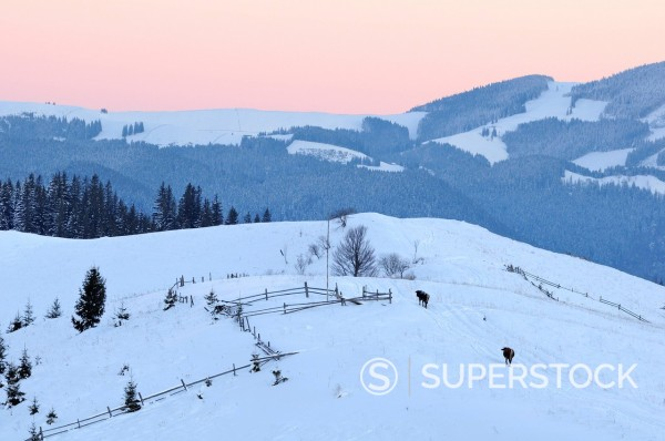 Dezembronya landscape in Ukraine Carpathian Mountains : Stock Photo