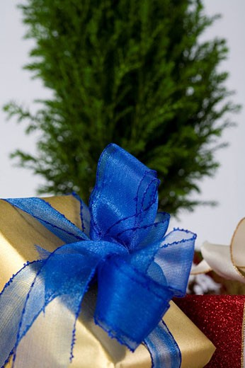 still life of christmas presents and small tree : Stock Photo