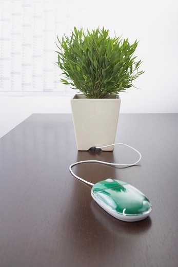 computer mouse and potted plant on table : Stock Photo