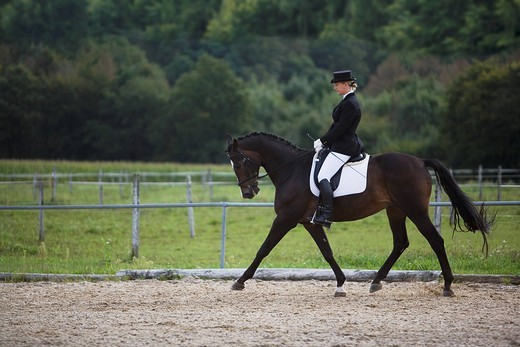 female dressage rider exercising : Stock Photo