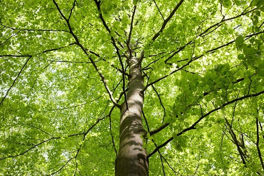 low angle view of tree : Stock Photo