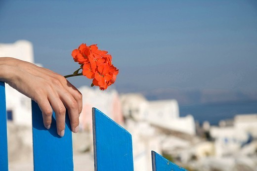 Hands holding flower : Stock Photo