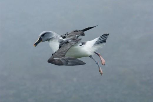 Bird Island, South Georgia Island, Sub-Antarctic. : Stock Photo