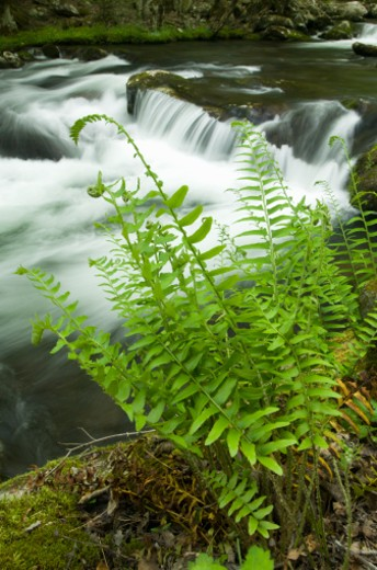 (Blurred motion), Great Smoky Mountains NP, Tennessee, USA : Stock Photo