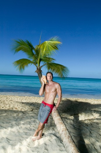 Man on beach, kleaning against palm tree, holding shell to ear : Stock Photo