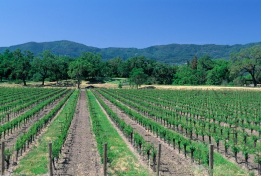 Stock Photo: 1672R-14101 USA, California, Napa Valley
