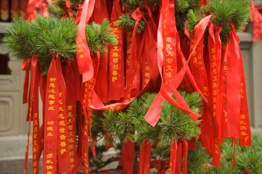 Stock Photo: 1672R-14167 China, Shanghai, Prayer ribbons tied on pine tree on grounds of Jade Buddha Temple
