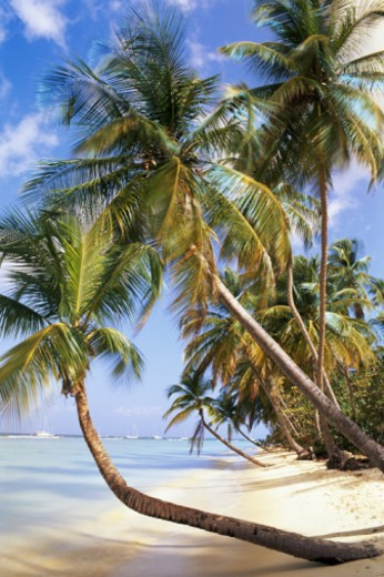 Stock Photo: 1672R-15088 Trinidad and Tobago, Tobago, Pigeon Point, tropical beach