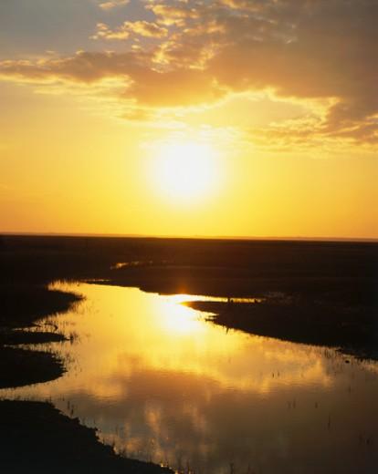 USA, Georgia, Sapelo Island, sunrise over tidal marsh : Stock Photo