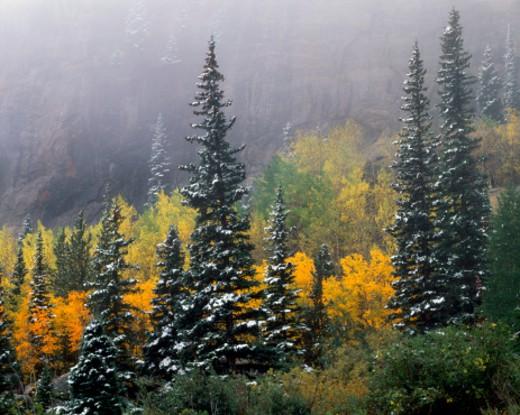 Stock Photo: 1672R-20168 USA, Colorado, Rocky Mountain NP, Bear Lake, forest, autumn