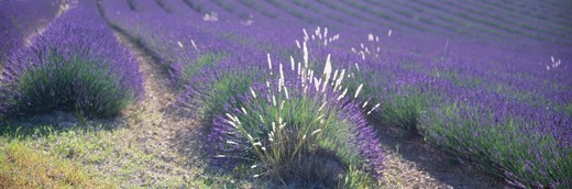France, Provence, Luberon : Stock Photo