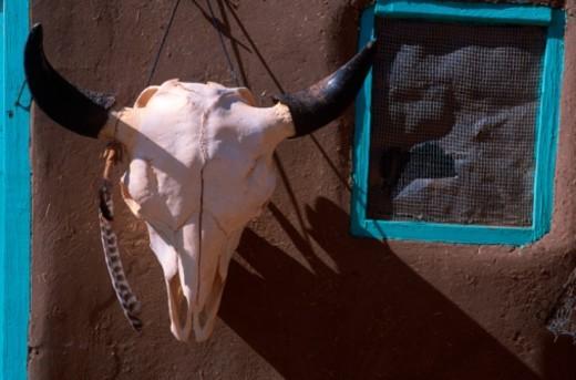 USA, Arizona, Taos Pueblo, cow skull on Adobe hut, close-up : Stock Photo