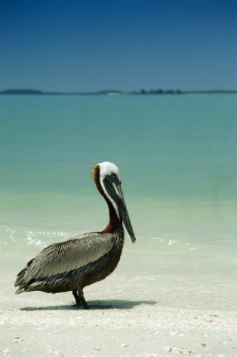 Stock Photo: 1672R-2399 Sanibel Island, florida, USA. June 2003