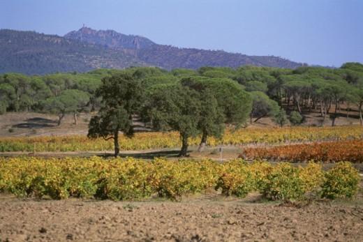 France, Provence : Stock Photo