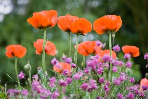 beauty in nature, botany, flower, plant, abundance, tranquil scene, freshness, idyllic, friendship, organization, meadow, petal, fragility, selective focus : Stock Photo