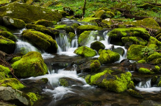 Moss covered rocks and cascades in a mountain stream in The Great Smoky Mountains National Park. : Stock Photo