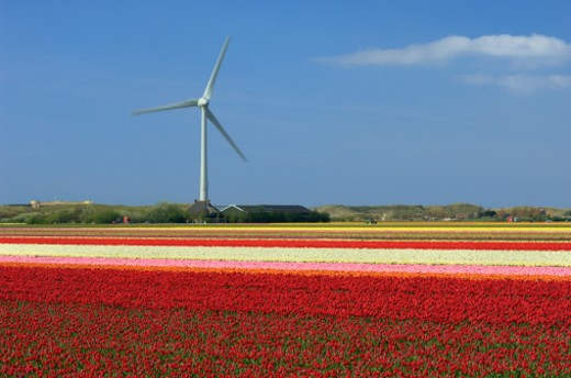 Stock Photo: 1672R-34356 Netherlands, North Holland, Wind power station in a multicolored flower field of Tulips