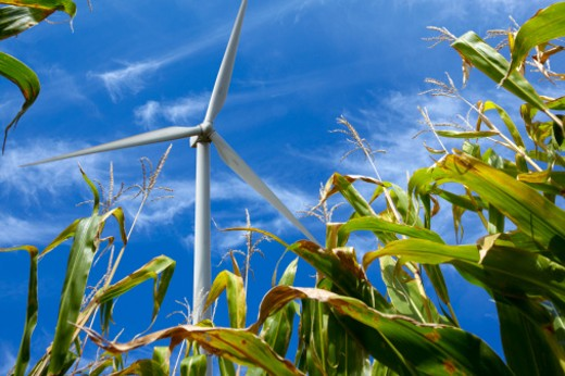 Wind turbine creates green power electricity above a corn field : Stock Photo
