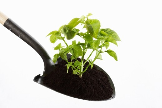 shovel with plant in dirt : Stock Photo