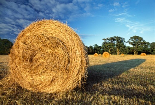 Stock Photo: 1672R-39790 Rolled bunch of straw in a cropped wheat field on the left side of image, with its long shadow on right, sunset and blue sky, wide angle view, Ireland, Munster, Limerick County, Adare, Adare manor