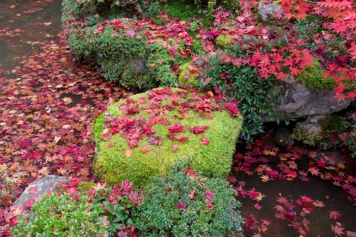 Red fallen leaves on moss and pond : Stock Photo