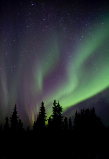 Stock Photo: 1672R-41711 Aurora Borealis over Alaskan forest in winter